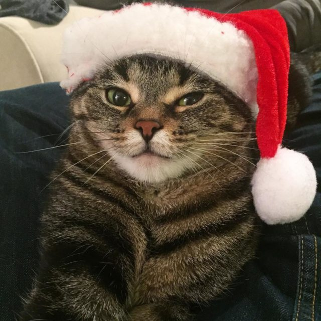Merry Catsmess everyone from my grumpy but fucking adorable littlehellip